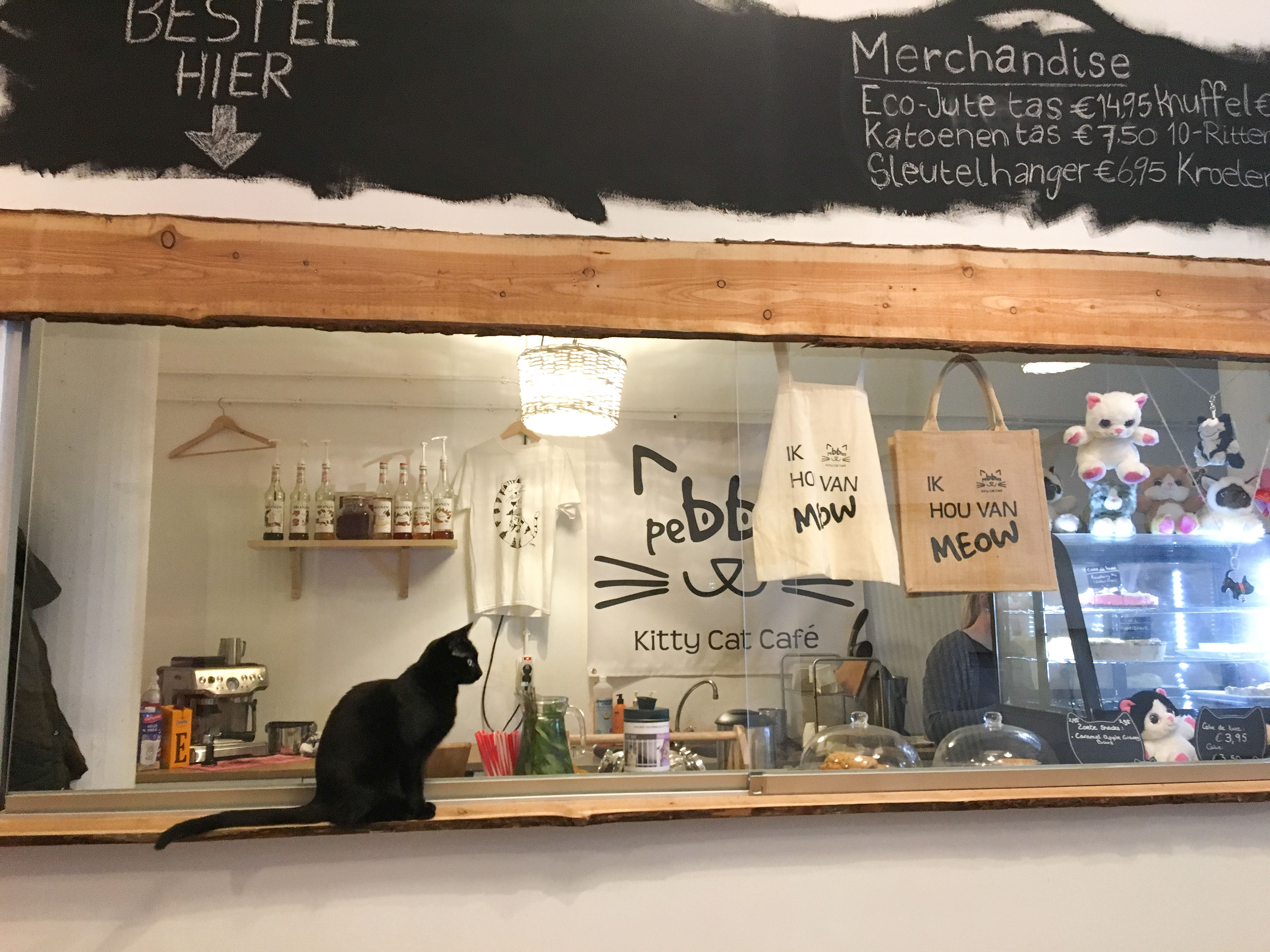 Cheesecake & cat cuddles at Pebbles Kitty Cat Café